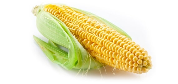 Genetically Modified Corn Food List