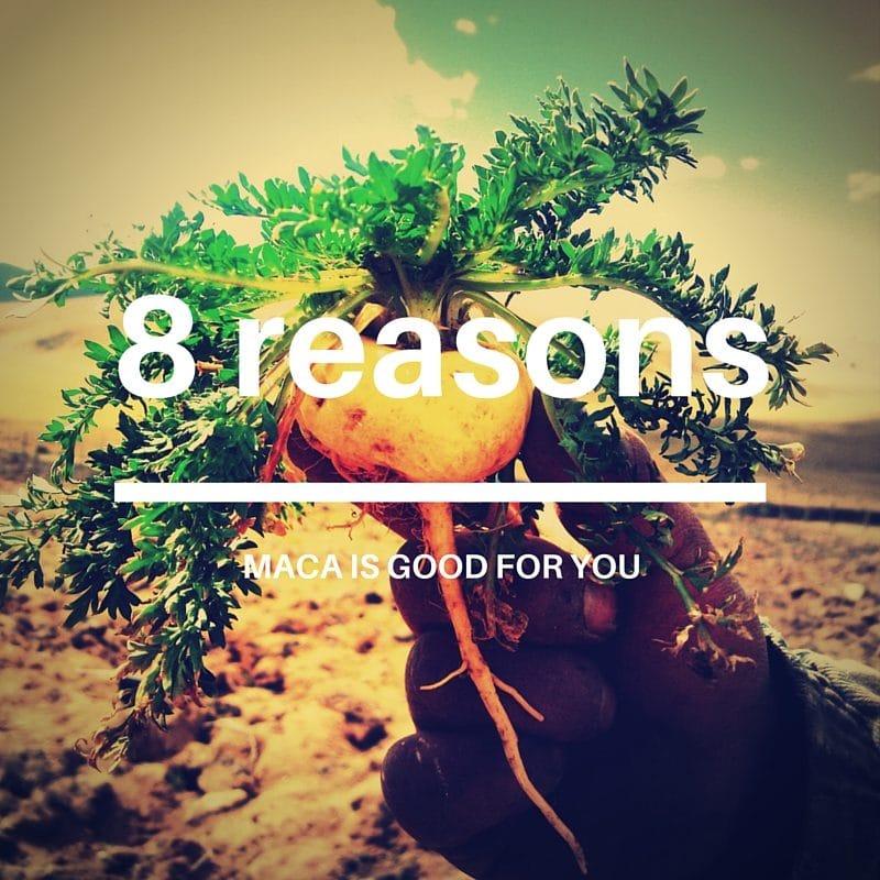 Maca Benefits - 8 reasons maca is good for you