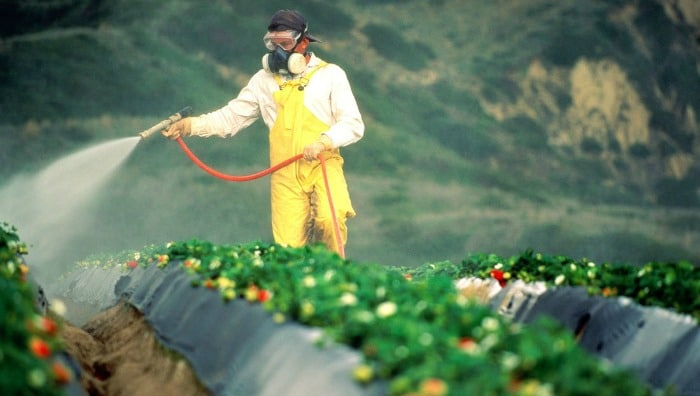 Man Spraying Crops with Roundup