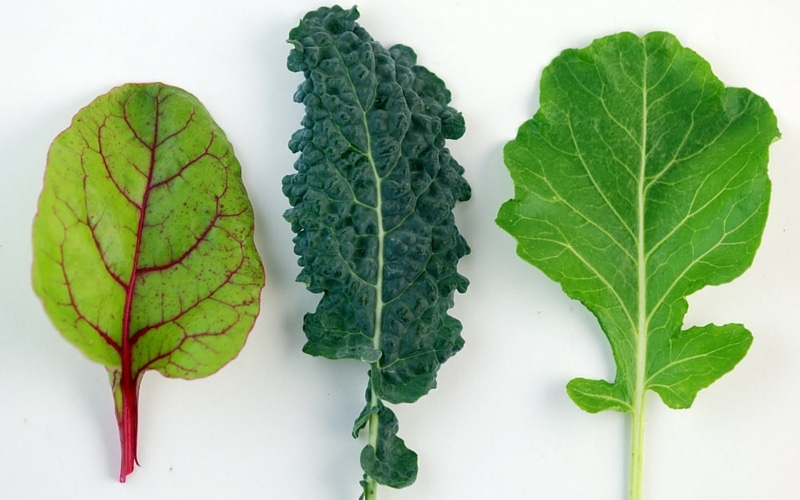 9 Common Nutrient Deficiencies - Calcium