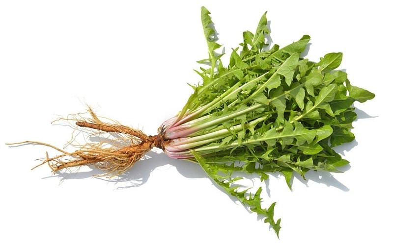 7 Liver-Healthy Foods - Dandelion Root