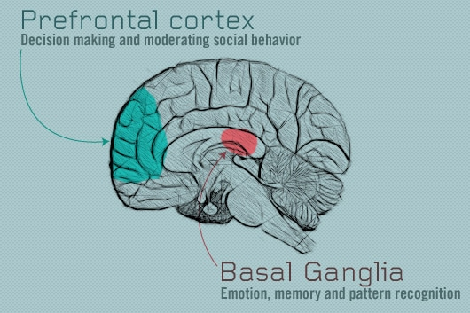 Healthy Habits and the Prefontal Cortex and Basal Ganglia