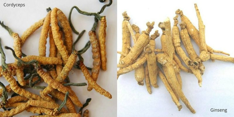 Cordyceps and Ginseng for True Energy