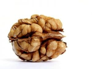 Walnut shaped like a brain
