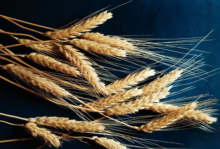 Most Common Food Intolerances - Wheat and Gluten