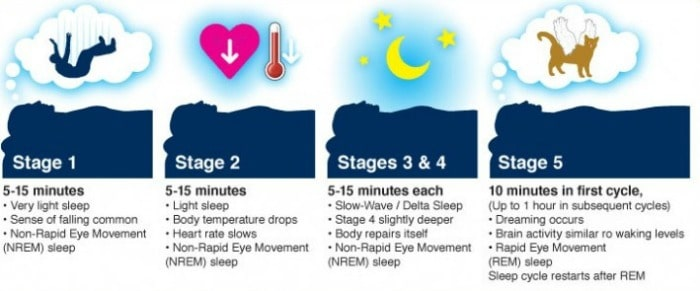 Stages of Sleep Chart