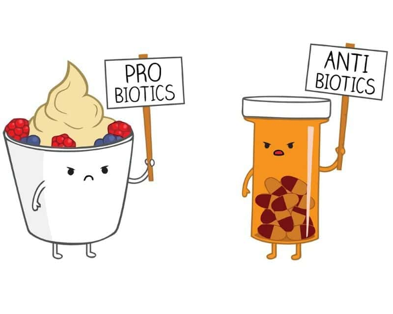 Probiotics take antibiotics less effective mean