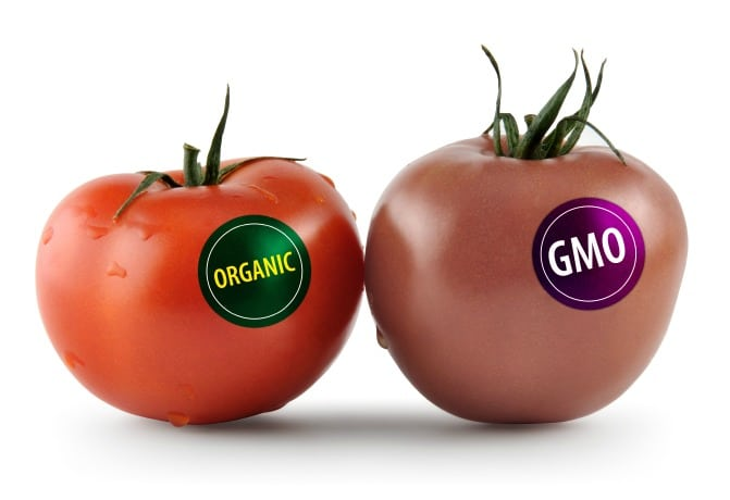 gene modified food is a bad Genetic modification has a sinister sound that might conjure up vision of mutant fruits and strange plants with unusual powers the truth about genetically-modified foods -- often called transgenic or genetically-engineered food -- isn't nearly that riveting, although it is controversial growers.