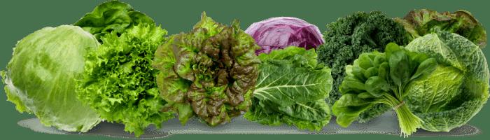 Fibrous Veggies