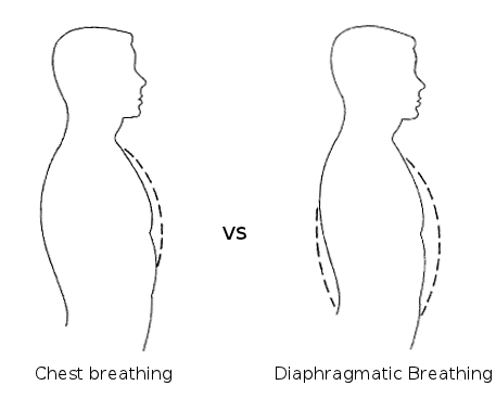 Chest Breating vs Belly Breathing illustration