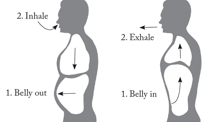 belly breathing illustration