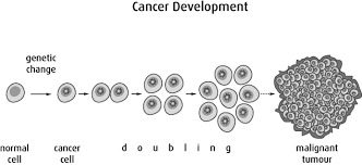 Cancer Cell Development