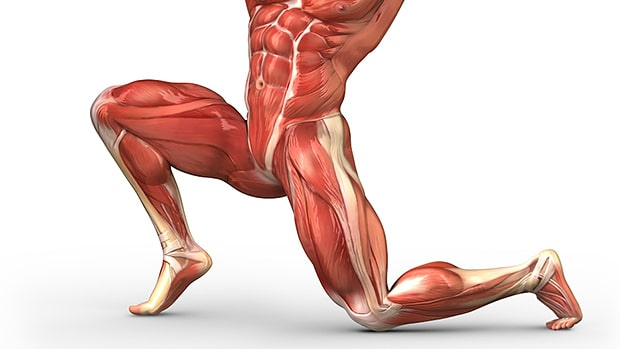 Why You Need to Strengthen Your Hip Flexors (And the 5 Best ...