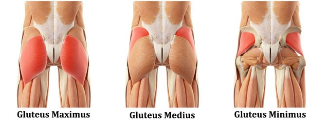 Gluteus Medius: 21 Exercises to Train This Forgotten Butt ...